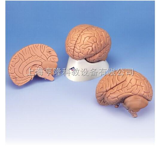 新标准脑模型,2部分