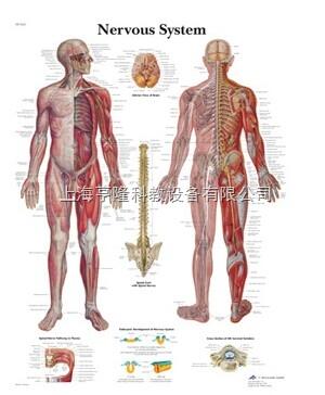 新Nervous System