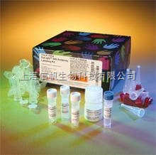 人T2毒素 ELISA试剂盒7折促销,现货供应,提供售后服务