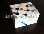 明胶酶谱法试剂盒