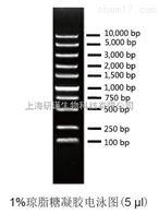 200次Super DNA Marker