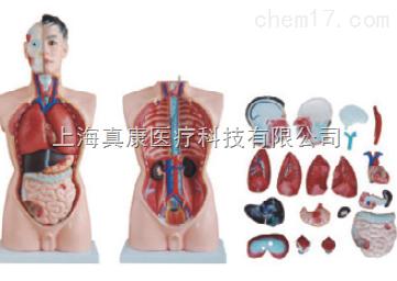 男性躯干模型19件(人体骨骼模型)