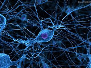 人 皮肤 成 纤维细胞 ,HSF 上海心语生物科技有限