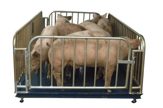 2T猪笼秤