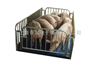 DCS-XC-H嘉兴5吨动物秤,1.5m*1.5m称猪电子地磅