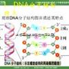 DNA甲基化